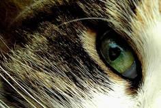 cat eye by Svennovitch