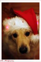Santa's little helper by olivianeacsu