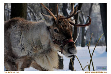 Rudolph by olivianeacsu