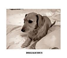 doggalicious by JohnKeats