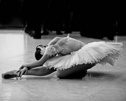 swan by yabbles