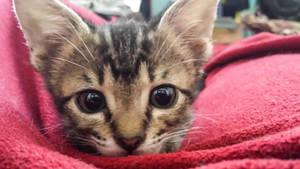 green kitten - pounce by yabbles
