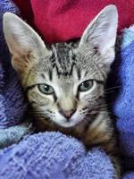 green kitten - ears by yabbles