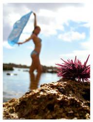 Sea Urchin by indie-cisive