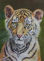 Sumatran tiger cub, coloured pencil by Sarahharas07