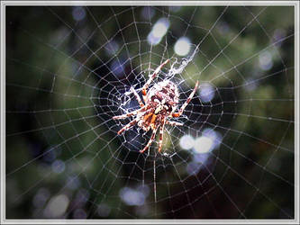 Cross Spider II by Aranka