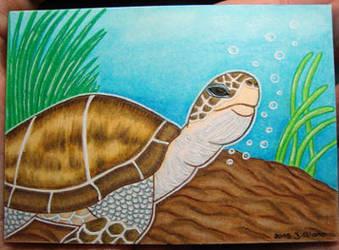 #41 SeaTurtle/Meeresschildkroete (Kakao/ATC/ACEO) by Jacura