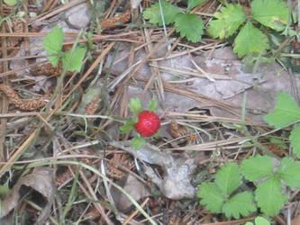 Strawberry by kenlybop