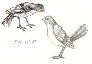 .:Birdies:. by silverdragon27