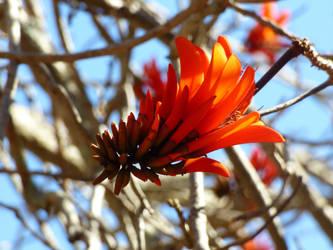 plant by SprocketTheWolf