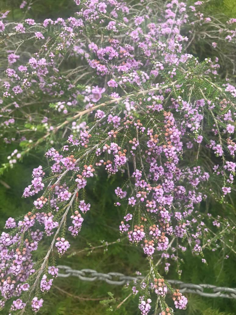 Purple wildflowers 16/12/2018 by Saraeustace91