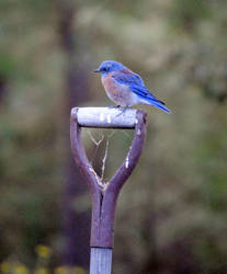 Blue bird morning. by Rhed-Dawg