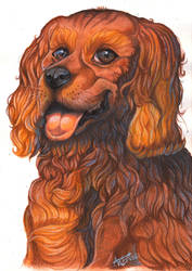 Cavalier King by ARVEN92