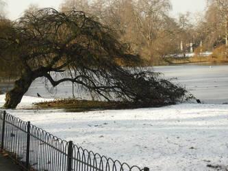 Bending Tree by OceanSilverBreeze