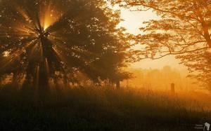 Golden Trees by TomaszPrzybylo