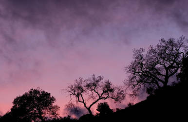 Backlit Trees 1 by themobius
