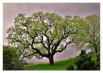 Oak by themobius