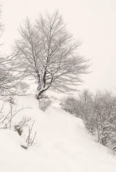 snow Ravnec by Nanera