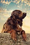 The Dog by marinsuslic