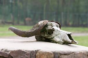 Skull 002 by ISOStock