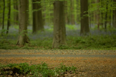 Blue Forest Hallerbos 008 by ISOStock