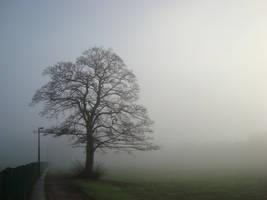 Tree in Leeds by beetea
