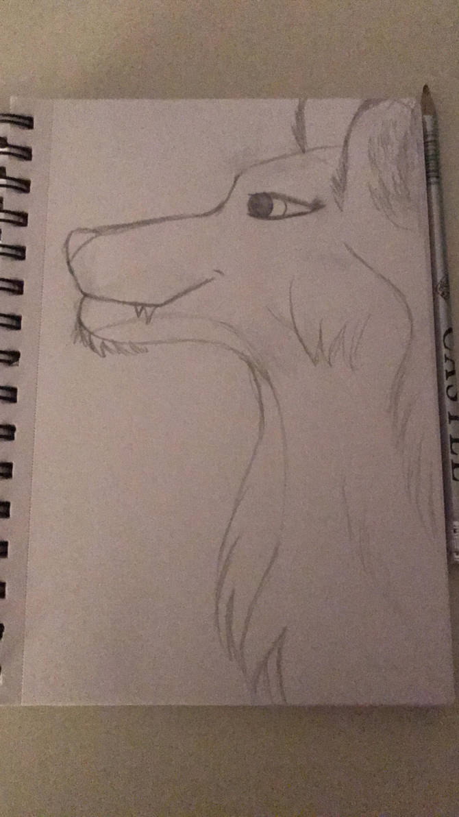 Wolf sketch by Abiisartsy