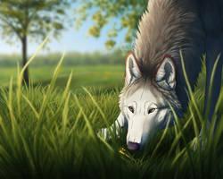 Cardinel by Canis-ferox