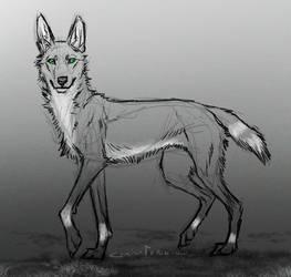 Dingo by Canis-ferox
