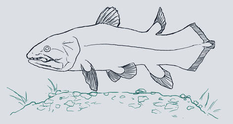 Coelacanth by Canis-ferox