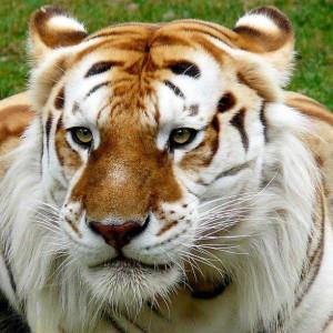 TiggyPaw101's Profile Picture