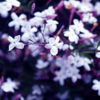 .:Little Spore World:. by Manon-Blutsanguen