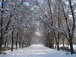 Allee de l'hiver by Helkathon