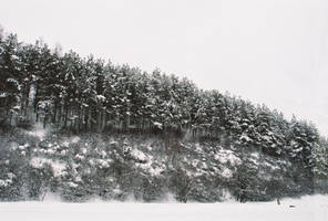 White Forest by Helkathon