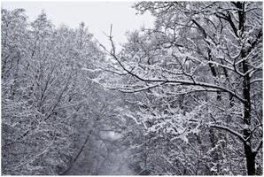 Winterpattern by Helkathon