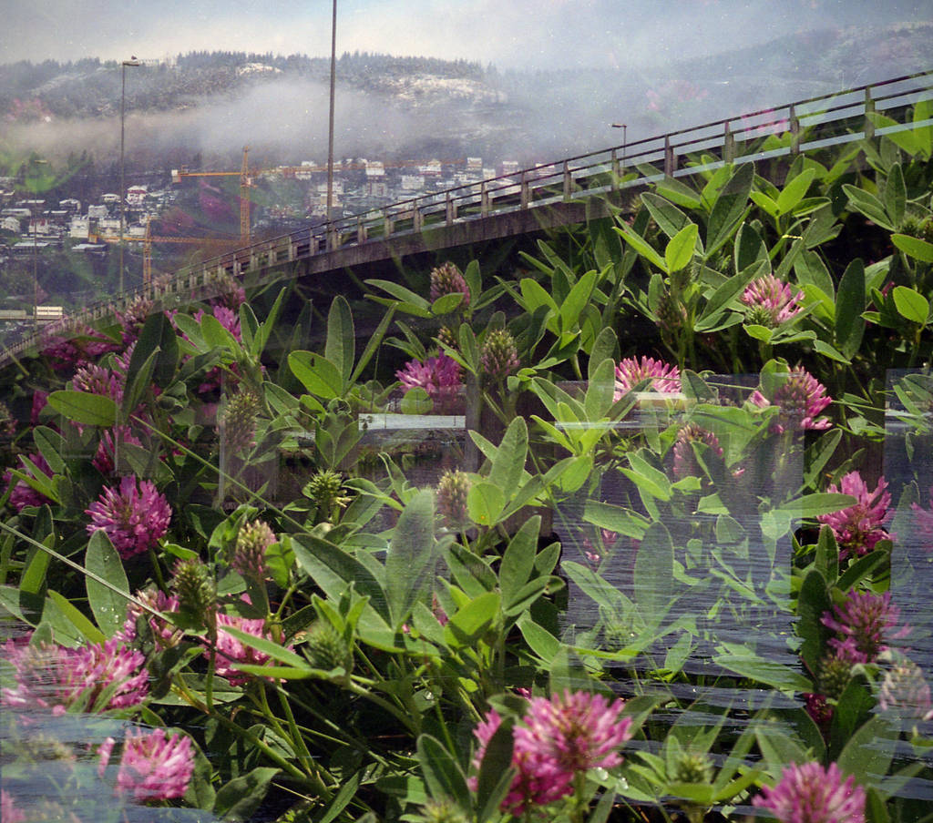 FilmSwap: Norwegian Bridge Meets Lithuanian Clover by Helkathon