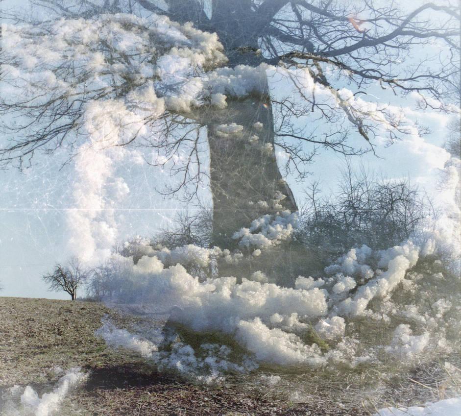 FilmSwap: My Tree in the Clouds by Helkathon