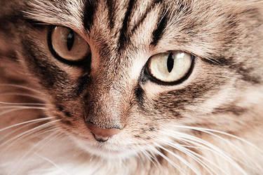 cat_1 by LioneliaKorf
