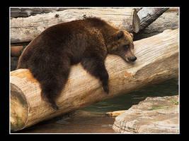 Bear 1 by acojon