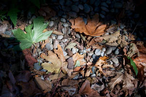 Leaves and Pebbles Stock by muttbutt