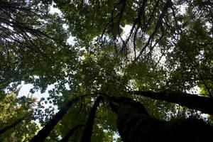 Trees Stock 3 by muttbutt