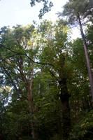 Trees Stock 5 by muttbutt
