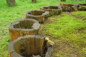 Tree Stumps by cthonus