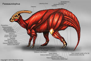 Parasaurolophus Muscle Study by TheDragonofDoom