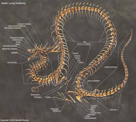 Asian Lung Skeleton Anatomy by TheDragonofDoom
