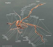 Gryphon Skeleton Anatomy by TheDragonofDoom