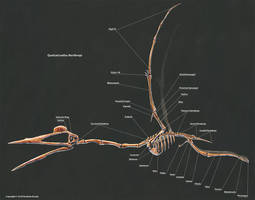 Quetzalcoatalus Northropi Skeletal Study by TheDragonofDoom