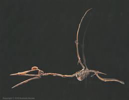 Quetzalcoatalus Northropi Skeletal (No Labels) by TheDragonofDoom