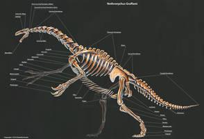 Nothronychus Graffami Skeletal Study by TheDragonofDoom