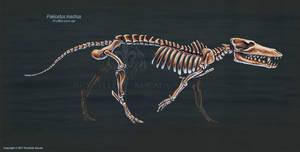 Pakicetus Inachus Skeletal Study by TheDragonofDoom